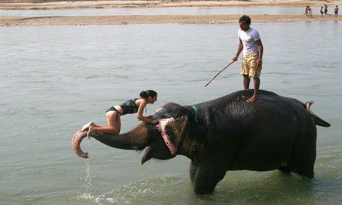 NEPAL / Chitwan / Sauraha / oswajanie się ze słoniem