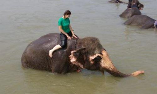 NEPAL / Chitwan National Park / Chitwan National Park / Kapiel ze słoniem