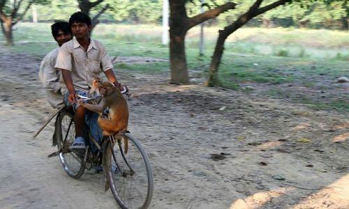 NEPAL / Therai / Lumbini / małpi stop