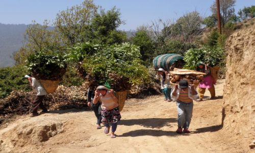 NEPAL / Himalaje / Droga z Sundarijal do Chisapani / Powrót z pola