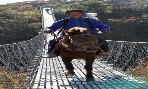 Zdjecie NEPAL / Langtang / ok/Kyanjin Gompa / ihaaa