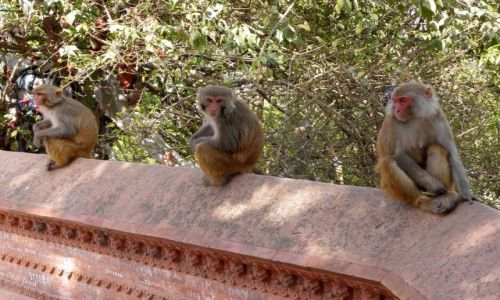 Zdjecie NEPAL / Dolina Kathmandu / Kathmandu / Nuda....