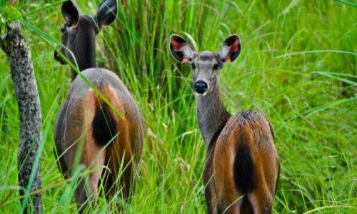 Zdjecie NEPAL / - / Chitwan / konkurs - Safari