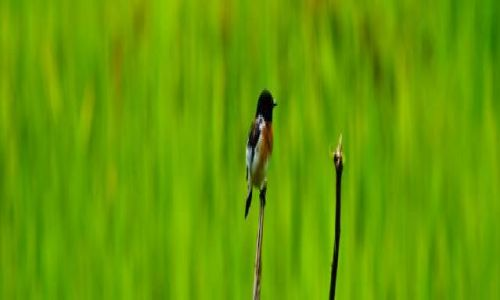 Zdjecie NEPAL / - / Dhandruk / Ptak