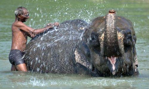 Zdjecie NEPAL / Chitwan / rzeka Rapti, Sauraha / kąpanie słonia