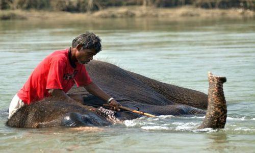 Zdjęcie NEPAL / Chitwan / Sauraha / kąpiel słonia