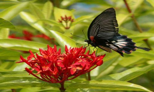 Zdjecie NEPAL / - / Pokhara / Motyl