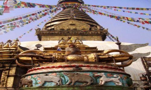 Zdjęcie NEPAL / Dolina Katmandu / Katmandu / Swayambunath - królestwo małp