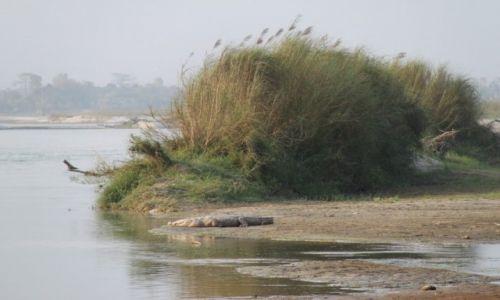 Zdjecie NEPAL / - / Chitwan National park / Dalsze spotkanie z Krokodylem :)