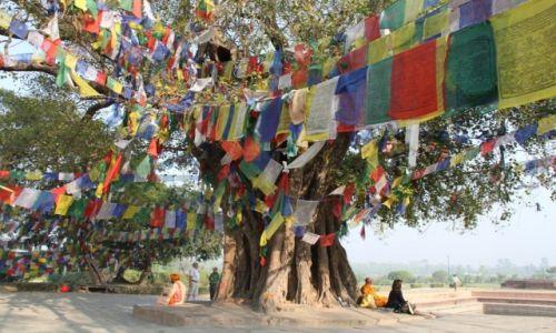 Zdjecie NEPAL / - / Lumbini / Tu urodził się Budda...