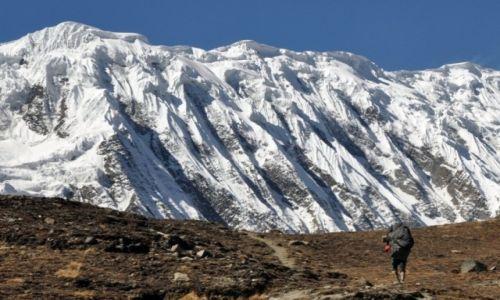 NEPAL / Annapurna Round Trek / w drodze do Tilicho BC / tragarz