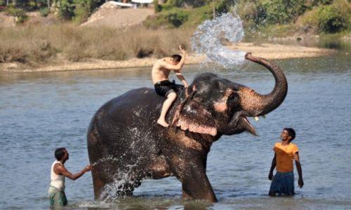 Zdjecie NEPAL / Therai / Chitwan / zabawa na słoniu