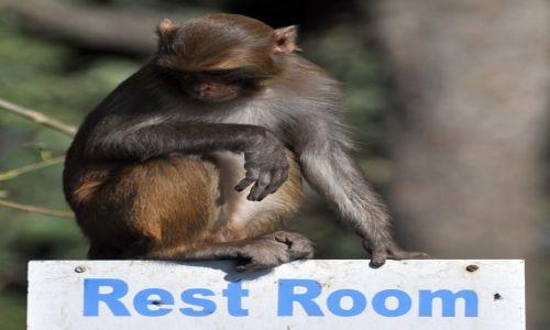 Zdjecie NEPAL / Kathmandu / Swayambunath / Rest room