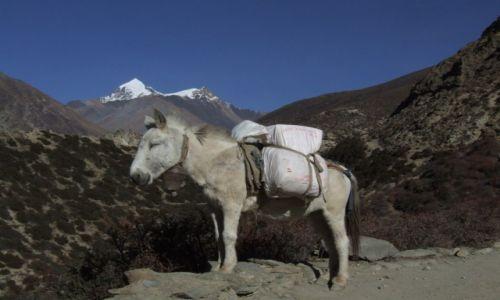 Zdjecie NEPAL / Annapurna  / Nepal / Treking