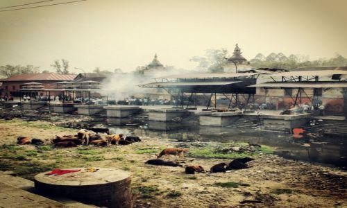 Zdjecie NEPAL / Kathmandu / Pashupatinath Temple  / Cremation platforms