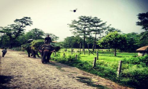 Zdjęcie NEPAL / Chitwan National Park / Chitwan National Park / slon