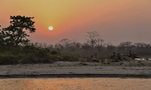 Zdjęcie NEPAL / - / Chitwan National Park / W dżungli...