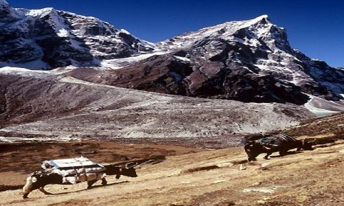 NEPAL / Himalaje / Trekking w rejonie Mount Everestu / W drodze do ..... karawana