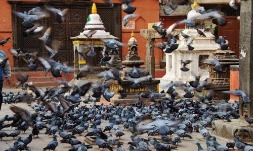 Zdjęcie NEPAL / - / Patan / Wśród skrzydeł