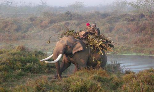 Zdjecie NEPAL / Chitwan / Chitwan / ***