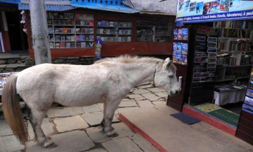 Zdjęcie NEPAL / Poon Hill / Ghorepani / Przyszedł koń do księgarni...