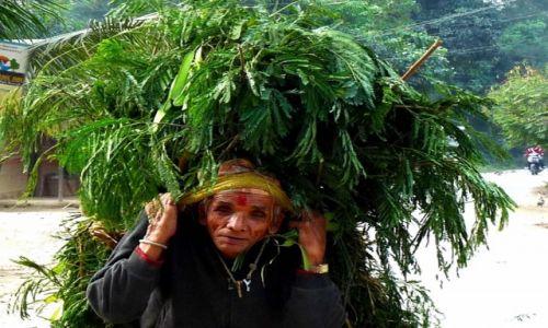 Zdjecie NEPAL / - / Nepal / staruszek