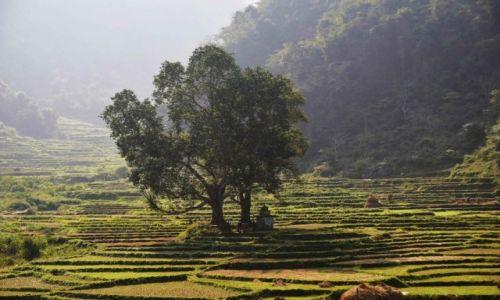 Zdjęcie NEPAL / Centralny Nepal / Okolice Pokhary / Kapliczka przy drzewie