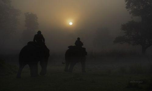 Zdjęcie NEPAL / S / Chitwan / Brzask w Chitwan