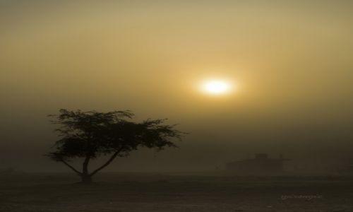 Zdjęcie NEPAL / S / Chitwan / O świcie