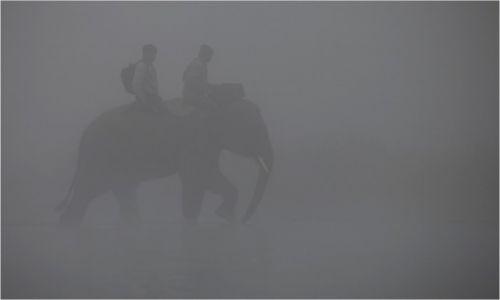Zdjęcie NEPAL / Chitwan / Chitwan / We mgle