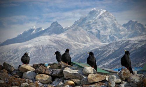 Zdjecie NEPAL / W okolicach Mt. Everest / na szlaku / Ptaszki