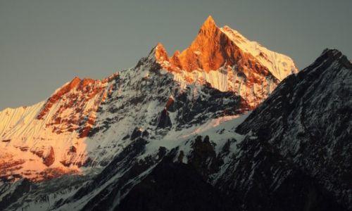 Zdjecie NEPAL / Himalaje / Deurali / Złote góry