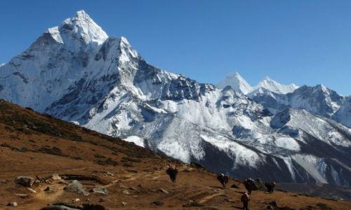 Zdjecie NEPAL / Sagarmatha / Dingboche-Lobuje / Tragarze