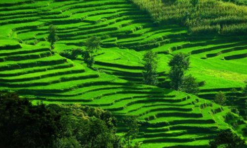 Zdjecie NEPAL / - / Nagarkot / Pola ryżowe
