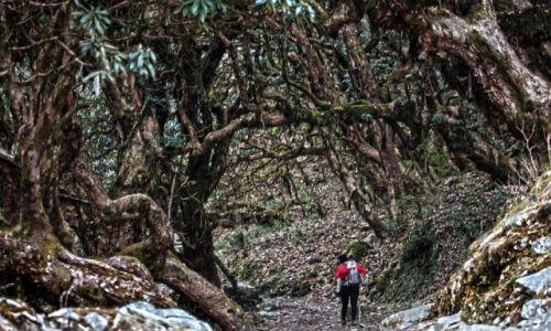 Zdjecie NEPAL / W drodze do ABC / Góry / Baśniowy las