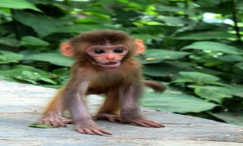 Zdjecie NEPAL / Kathmandu / Swayambunath - Świątynia Małp / Mamooooo!!!!!
