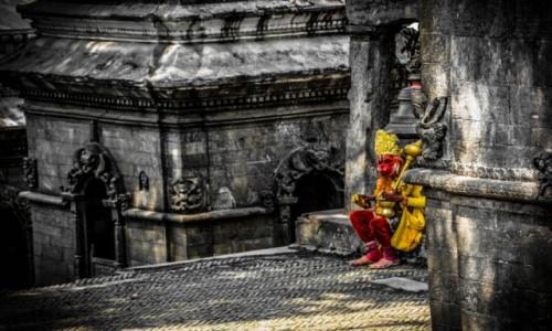 Zdjecie NEPAL / Kathmandu / Kathmandu / kr�l lew :)