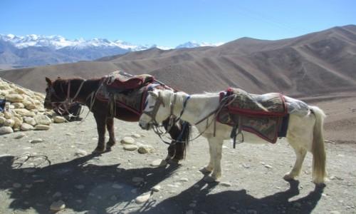 Zdjęcie NEPAL / Mustang - Królestwo Lo / Dakmar / Królewskie konie