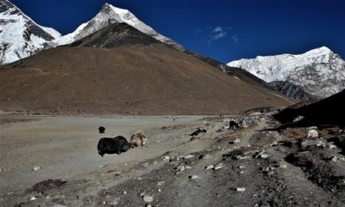 NEPAL / Himalaje Mahalangur Himal / Okolice Pareshaya Gyab (Base Camp) / Imja Tse