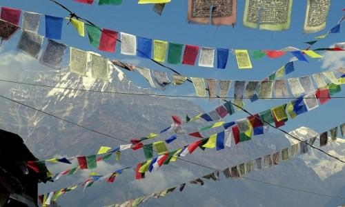NEPAL / Himalaje - Annapurna Circuit / Ghandruk / Chorągiewki modlitewne (z Annapurną w tle)