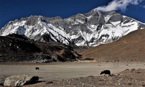 Zdjecie NEPAL / Himalaje, Lhotse Glacier / W drodze do BC Imja Tse (Island Peak) / Niesamowite ściany Nuptse