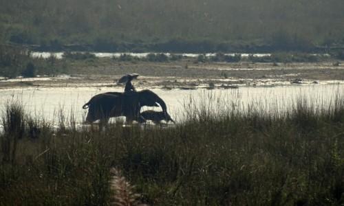 Zdjęcie NEPAL / Royal Chitwan National Park / rozlewiska rzeki Rapti / Ich  troje