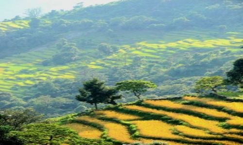 Zdjecie NEPAL / brak / Sarangkot / pola ryzowe