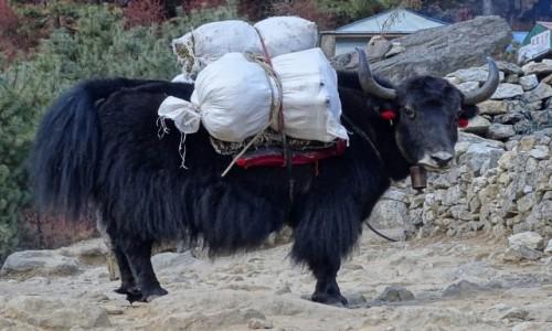 Zdjecie NEPAL / Himalaje - Sagarmatha National Park / w drodze do Tengboche / Fotkę? - Bardzo