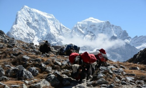 Zdjecie NEPAL / - / Himalaje / karawana