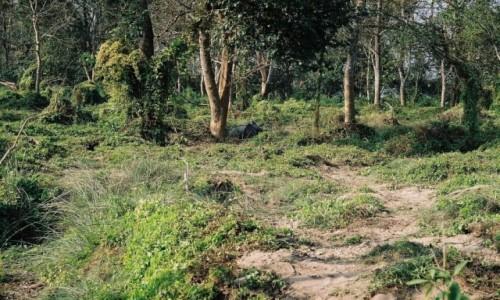 Zdjecie NEPAL / P.N. Chitwan / gdzieś w dżungli / śpiący nosorożec