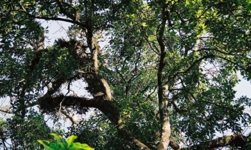 NEPAL / P.N. Chitwan / gdzieś w dżungli / kto znajdzie małpkę?