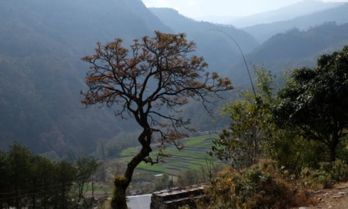 Zdjecie NEPAL / Annapurna Conservation Area / Shikha / Na szlaku z Tatopani do Shikha