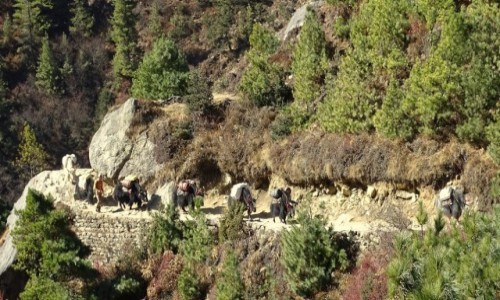 NEPAL / Himalaje - dystrykt Solukhumbu / w drodze do Namche Bazar / Karawana idzie dalej
