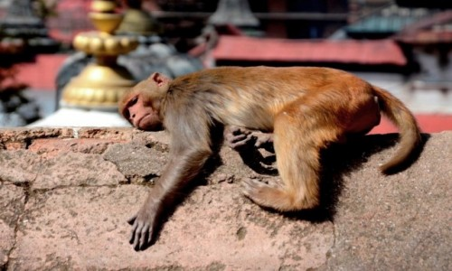 Zdjęcie NEPAL / Katmandu / Paszupatinath / ...i po urlopie